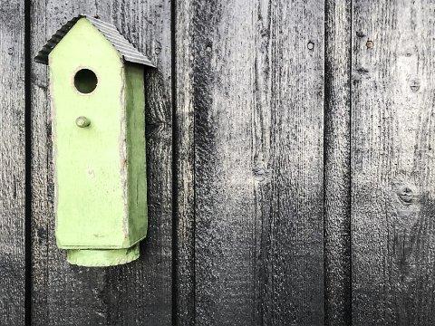 Flyttet inn: – Et uredd kjøttmeispar flyttet inn neste vår. I flere dager fløy de fram og tilbake, fram og tilbake med strå og annet egnet byggemateriale, skriver Hans-Petter Kjøge. Foto: Hans-Petter Kjøge