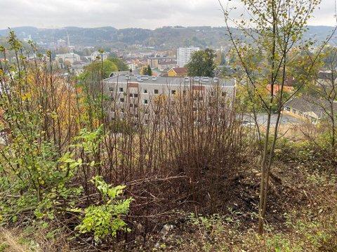 ARNESTEDET: Slik ser det ut på arnestedet for det høye smellet som vekket mange haldensere ved 05.00-tiden søndag morgen. Nedenfor sees bebyggelsen på Stangeløkka.