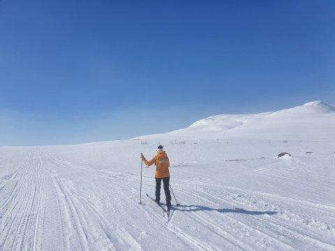 Slik ser det ut på påskefjellet i Eidfjord, måndag 6. april. I Fetaleitet er det skuterspor. Men elles i Sysendalen vert det ikkje trakka nye langrennsløyper denne påsken.