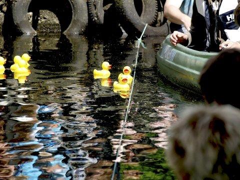 Jevn målgang: Det ble jevnt mellom første og andre and i fjor.  Foto: Privat
