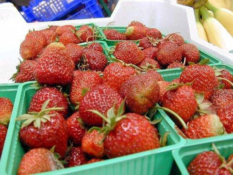 KRISEMØTE: Det har vore eit dårleg år for norske jordbærprodusentar. (Foto: Andres Malm / NPK)