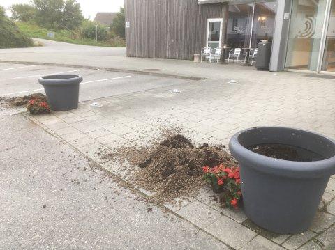 SLIK SÅ DET UT: - Det ser ut til å være en voksen person som ødelegger de uskyldige plantene, sier senterleder Magnar Vedvik.