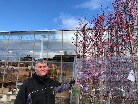 KLAR: Nils Sandvik hos Spanne plantesalg får nå inn masse planter til vårens hagearbeid.