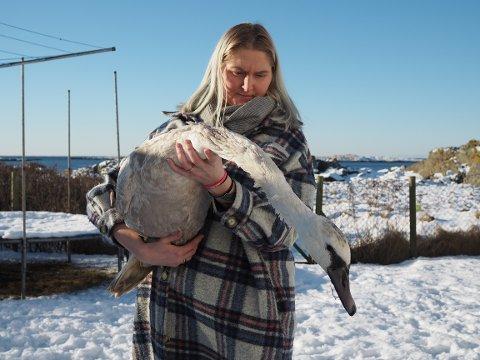 TOK TIL SEG: Ann Christin Lima-Widvey tok til seg den syke svanen familien fant i nabolaget.