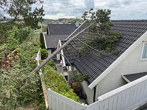 TRE: Gjerdet rundt eiendommen tok av for fallet.