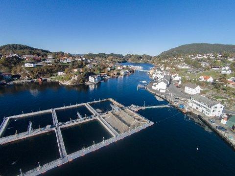 NEDGANG: Alsker-konsernet melder om eit middels 2020. Her frå Viking Fjord på Sunde.