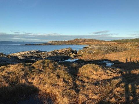 SPESIELL KYSTLYNGHEI: Kystområde på Årabrot skal muligens vernes på grunn av skjeldne plante og dyrearter.