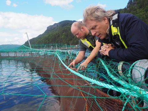 GODE RESULTATER: Sig Hansen (t.h.) studerer aktiviteten i laksemerden ved Vikedal, sammen med Øystein Hunstad som er driftsleder ved Mowi sitt anlegg.