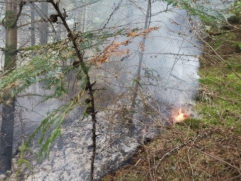 MYE VEGETASJON: Det brant i bakken mellom trærne på holmen.