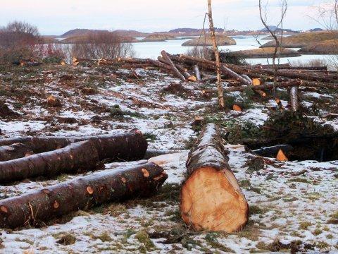 Sitka-hogsten i Skålvær gjør at utsikten mot blant annet Husvær er tilbake.
