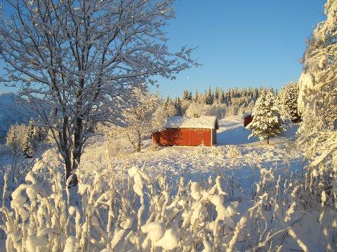 VRANGLÆRE: Denne plassen ville fått navnet Finnhåjen dersom man aksepterte at utgangspunktet var Finnhaugen. Men navnet på denne plassen er Mosåsen gård. Finnhåjen ligger litt høyre i terrenget.