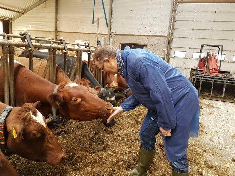 BIOGASS: SHMIL-direktør hilser på kyr under besøket på Den magiske fabrikken i Tønsberg