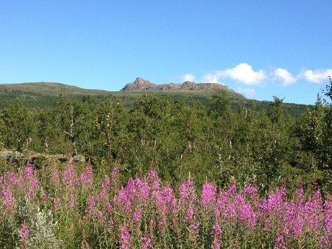 Atoklimpen er godt synlig og attraktiv for fjellvandringer på grensen mellom Hattfjelldal og Hemavan Täranby