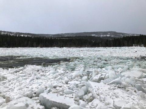 Når Vefsna er fulllpakket av is kan den lett gå over sine bredder.