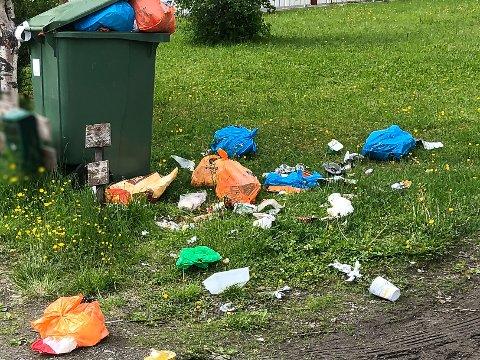 Her har feilsortering ført til at søpla ikke hentes, og dermed har dunken blitt full, før fuglene trolig har gjort sitt til at det ikke ser bra ut.