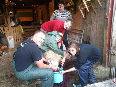 Stian Espedal (t.v) har ansvaret for at lørdagens saueslakting i Hattfjelldal  skjer i ærbødige former.  Her sammen med Johannes Hoff Krutådal, Kim André Haugan Schei, Laila Hoff og Nora Sørdal Liland.