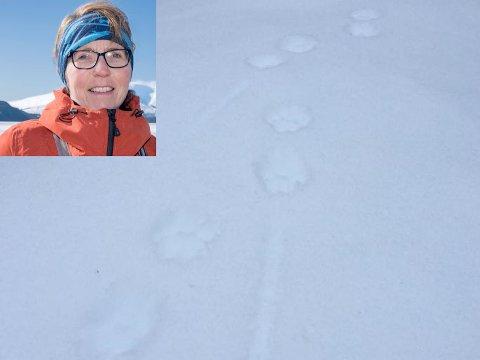 Hilbjørg Knutli (bildet) oppdaget tirsdag det hun trodde var gaupespor ved Ømmervatn. Et stort engasjement på Facebook gjorde derimot at hun ble litt mer i tvil.