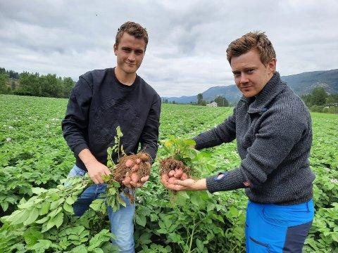 OPP AV JORDA: Petter Sund (til venstre) og Erling Paulsen skal sikre årets potetsesong selv om det er utfordringer med når utbygginga blir ferdig. Bildet er fra fjorårets sesong.