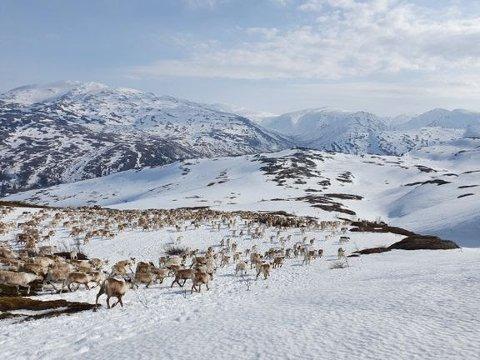 Motvind Norge ber sammen med Samerådet FN om hjelp til å stoppe vindkraftindustri i Øyfjellet.