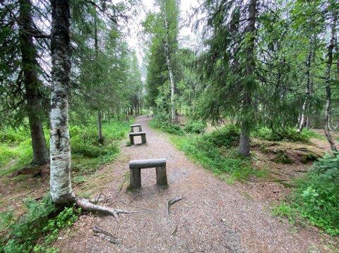SKOGEN: Det er i dag både lekeapparater og andre ting i skogen ved Granmoen skole. Her planlegges Eventyrskogen med blant annet trehytter, klatrejungel og hinderløype.