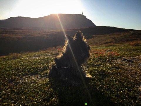 Turgåere i Hammerfest meldte om t-skjorteforhold på fjellet.