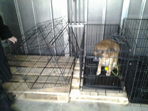 SATT USIKRET: Hunden Leo ble henvist til dekk av Boreals personal. Her måtte han sitte i et kaldt og usikret bur hele turen til Hammerfest.