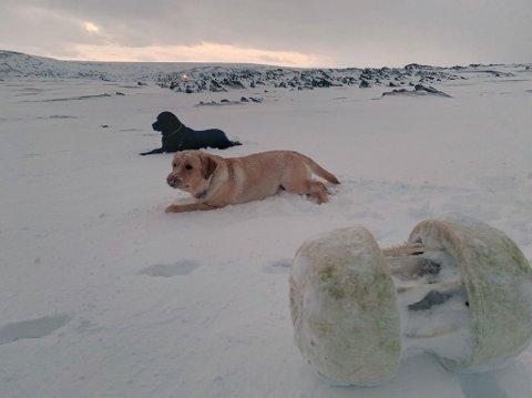 LEITEAKSJON: Hansen fant bøyen under 50cm snø ved Fuglenesbukta.