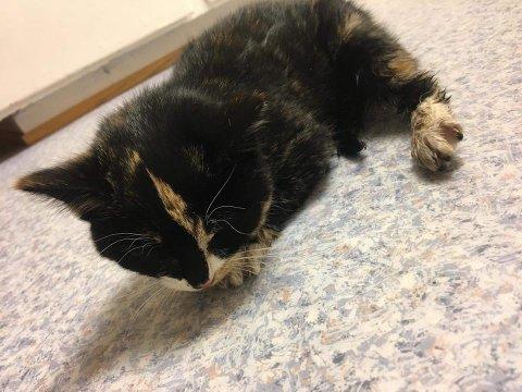 Denne kattungen ble torsdag bitt av en hund i Vadsø.
