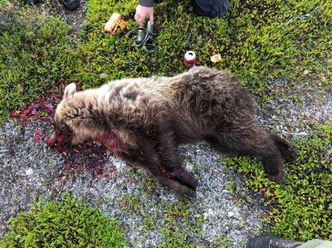 SKUTT: Ei binne på 35 kilo ble skutt på Skogerøya.