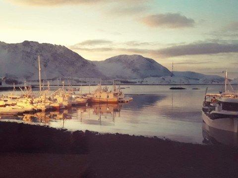 Småbåthavna i Bergsfjord
