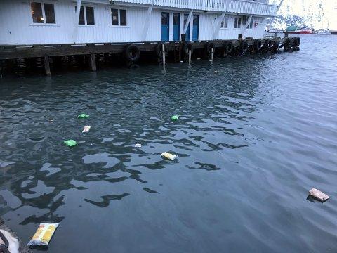 MÅSEFEST: Det ble potetgullfest for måsen, og fuglene  var svært ivrige på å hakke hull i posene som fløt i indre havn.
