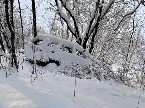 HER STÅR BILEN FORTSATT: Den utbrente bilen står fortsatt i Holstbakken i Alta kommune.