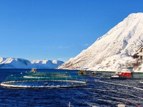 FIKK TILBUD OM HJELP:  – Vi har fått tilbud om bistand fra andre oppdrettsselskap, leverandører, fiskere og andre altaværinger som har vært i området. Det er vi veldig takknemlig for. Det er forferdelig å oppleve et snøskred, og godt å kjenne støtte fra lokalsamfunnet rundt oss, sier regiondirektrøren i Grieg Seafood Finnmark, Vidar Aamo Nikolaisen, i en pressemelding.
