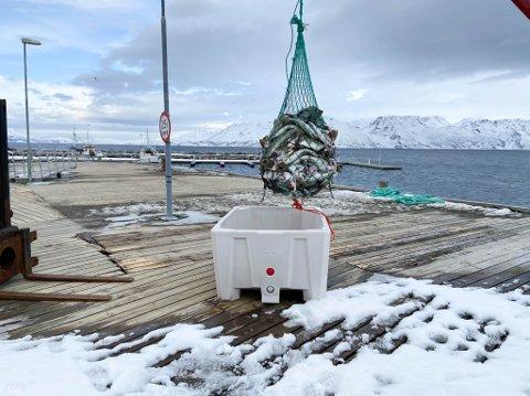 MÅ HA MER FISK I BÅTEN; Fiskemottaket på Storekorsnes i Alta kommune drives av Storbukt Fiskeindustri. De opplyser at de er avhengig av at det leveres mer fisk i Alta, om de skal ha mottaket åpent.