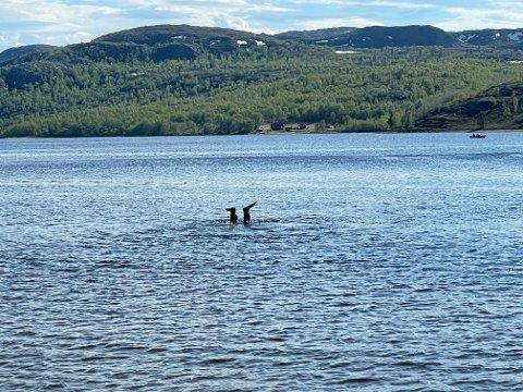 Flere dykkere var fredag i aksjon, etter at mannen ble meldt savnet.
