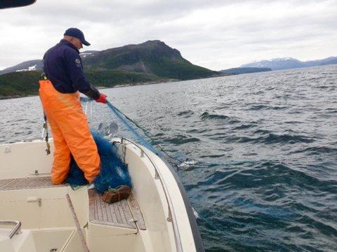 KVÆNANGEN:  Statens naturoppsyn har gjort tre inndragninger av til sammen fire ulovlige laksegarn i Nord-Troms tidligere i sommer.. I det ene garnet sto det syv pukkellaks.