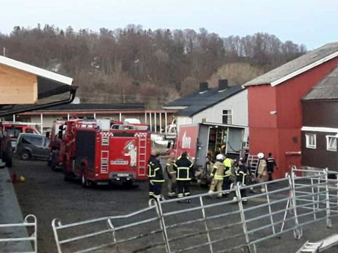 Åtte brannmenn fra Harstad dro over til Sandsøya mandag kveld for å bistå lokale redningsmannskaper på gården. Etter slukkearbeidet startet jobben med å redde lam og sau.
