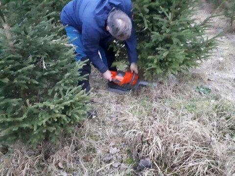 HOGST: Her sikrer Bjørn Bakkhaug et av årets juletrær for Mosvik idrettslag
