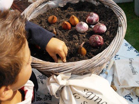 I KRUKKE: Det kan være lurt å legge løk i krukke når høsten er her.