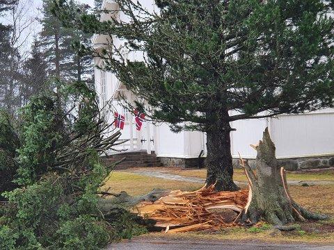 KNAKK TVERT AV: Uværet sørget for at dette treet ved Aurskog kirke knakk som en fyrstikk natt til lørdag.