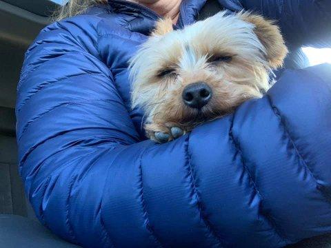 LYKKELIG SLUTT: Anette Elseth og mange andre bidro da to hunder løp rundt i trafikken. Nå er hundene trygt hjemme.
