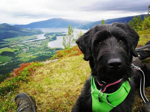 Tjorven ble bare tre år. Hunden ble så skremt av en rakettoppskyting for seks uker siden, at hun aldri ble den samme igjen.
