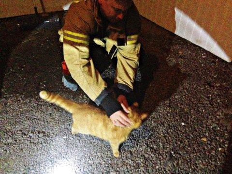 UTE: Katten satte pris på litt kos etter å ha blitt reddet ut .