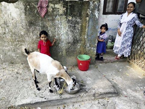 Jula andre steder: Som i India, der mange har nok med å skaffe mat til familien. Foto: Pål Nordby