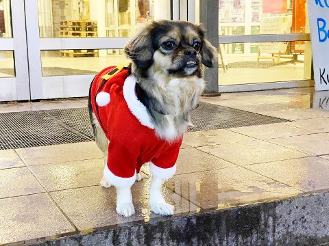 KAN FORHINDRE SJOKK: Enkle grep kan forhindre at nyttårsaften blir traumatisk for hunden.