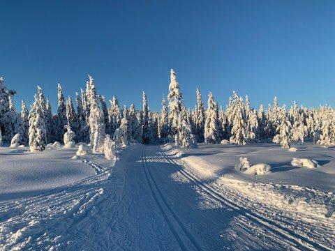 Fantastiske forhold: På de høyeste stedene i Vestfold. Foto: Vindfjellsamarbeidet