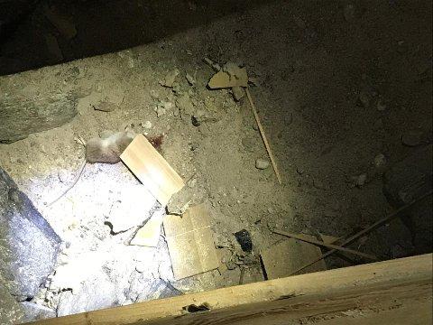En rotte har gått i fella i et hus i Ringveien.