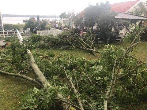 BLÅST OVER ENDE: Dette treet blåste ned og traff deler av uteområdet ved Haga Kystkafé. Trykk på pilene eller sveip for å se flere bilder. (Foto: Privat)