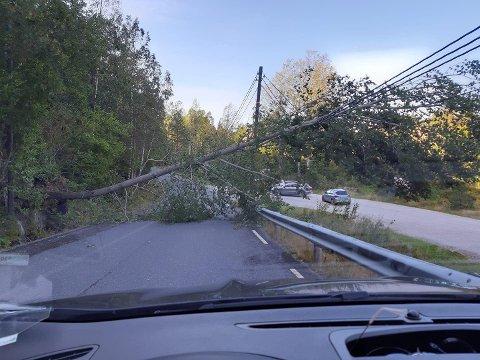 STRØMBRUDD: Vinden felte et stort tre over strømledningene ved Sandtangen i Kjølebrønd.