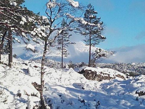 Endeleg vinterlys. Foto: Magne Heien.